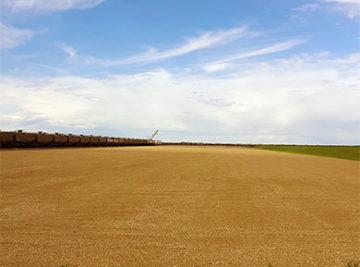 Agricultural feild